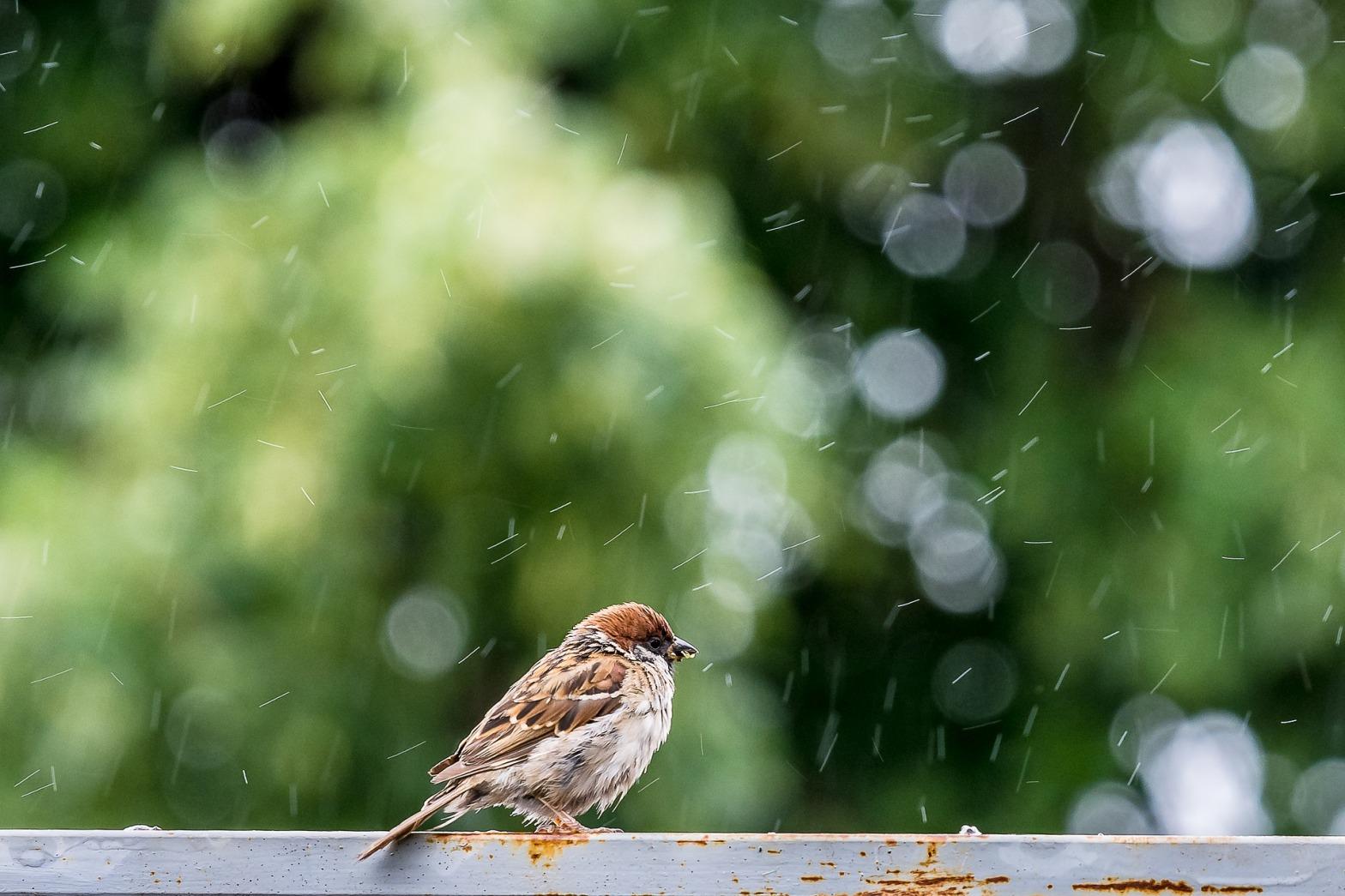 Nevischio-primavera-uccellino-clima
