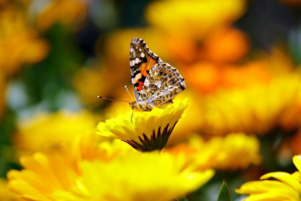 Farfalla-effetto-cambiamento-benessere-scelta-natura-equilibrio