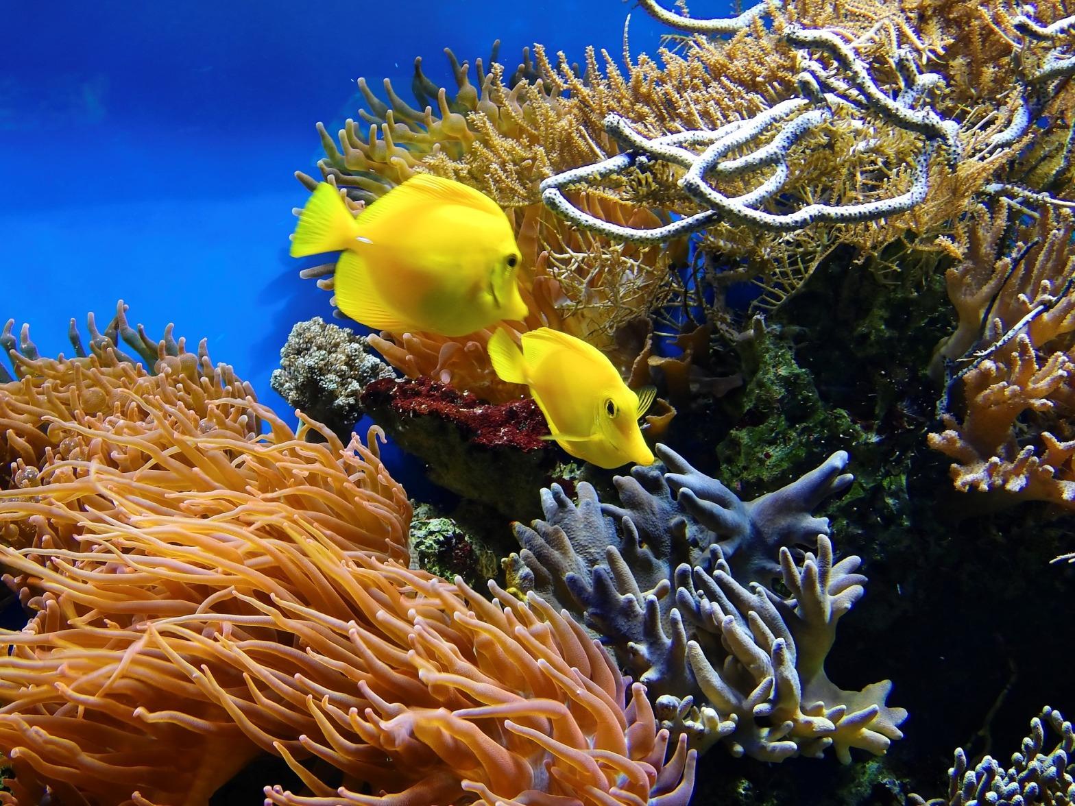 barriera-corallina-inquinamento-sbiancamento-morte-disastro-ambientale-articolo-blog