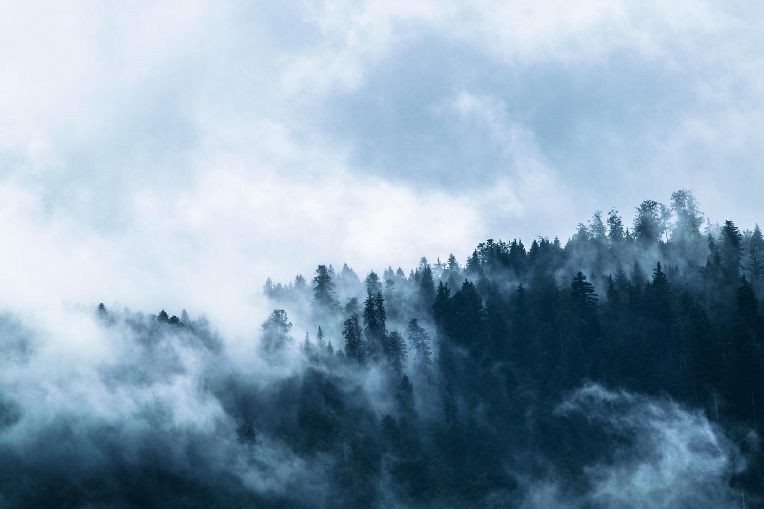 foresta-foreste-deforestazione-abbattimento-alberi-incendi-pericolo-crisi