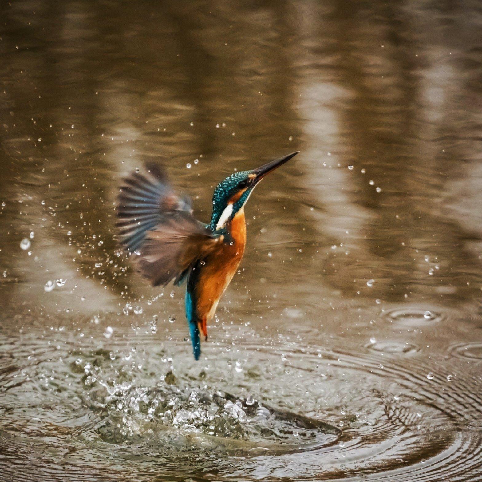 martin-pescatore-uccello-pesca-acqua-natura-ambiente-consapevolezza-difesa-blog