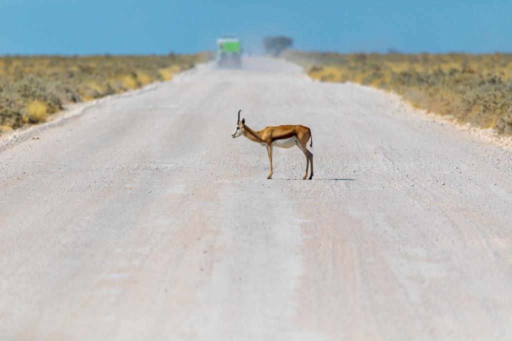 antilope-correre-veloce-tempo-stress-vita-moderna